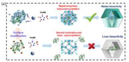 GRaphical Abstract Modulating the Biofunctionality of Metal‐Organic Framework‐Encapsulated Enzymes through Controllable Embedding Patterns